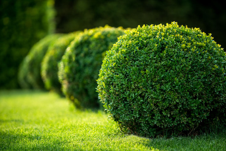 Services-espaces-verts-pepiniere