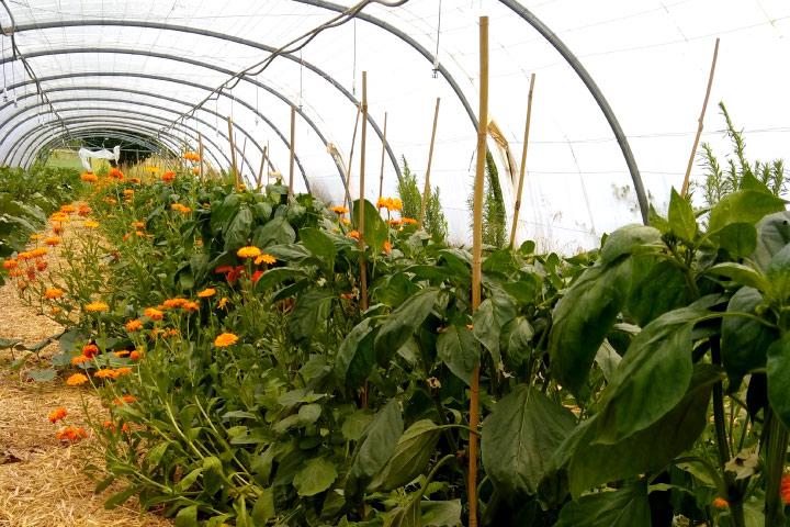permaculture-espaces-verts-ferme-magne
